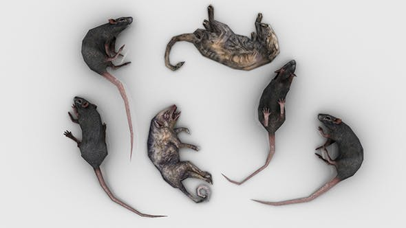 Pack of 6 Dead Rats - 3DOcean Item for Sale