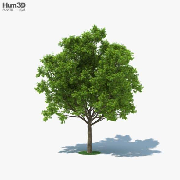 Red Oak Tree - 3DOcean Item for Sale