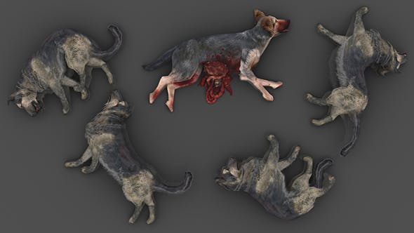 Pack of 5 Dead Dogs - 3DOcean Item for Sale