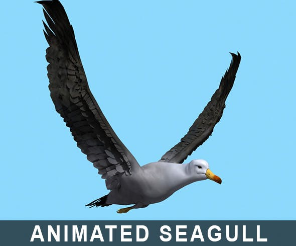 Rigged - Animated Seagull Flight Loop - 3DOcean Item for Sale