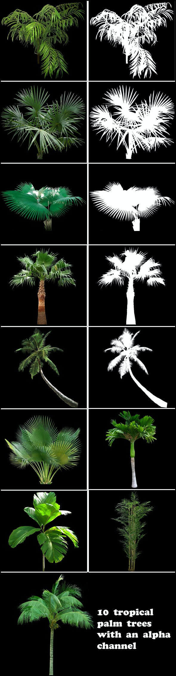 Tropical palm trees(alpha channel) - 3DOcean Item for Sale