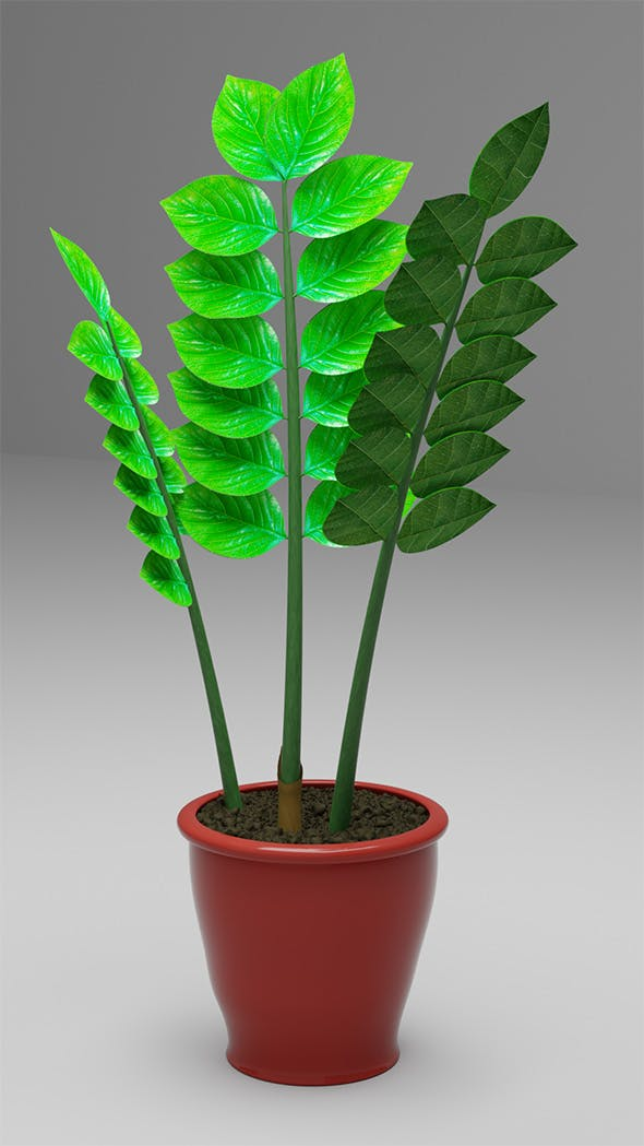 Zamioculcas flowerpot dollar tree - 3DOcean Item for Sale