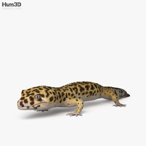 Common Leopard Gecko HD - 3DOcean Item for Sale