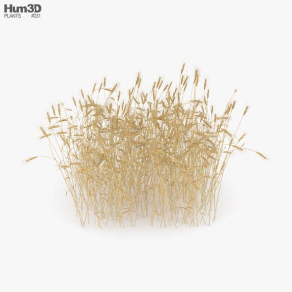 Wheat Field - 3DOcean Item for Sale