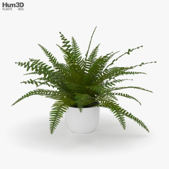 Fern - 3DOcean Item for Sale