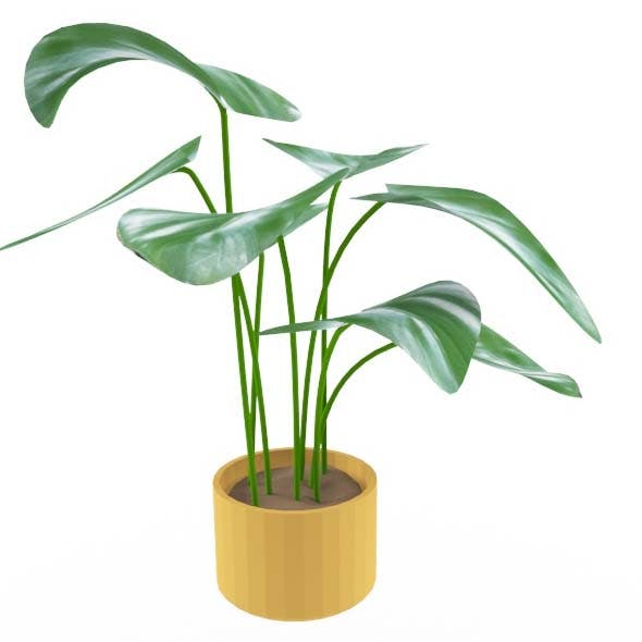 philodendron - 3DOcean Item for Sale