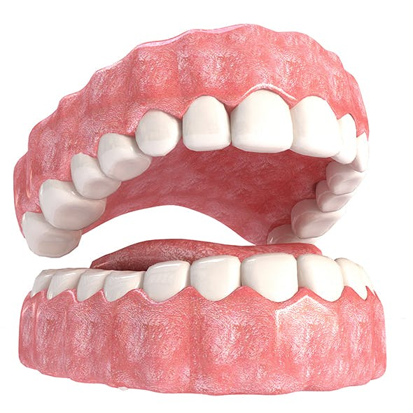Realistic Mouth teeth - 3DOcean Item for Sale