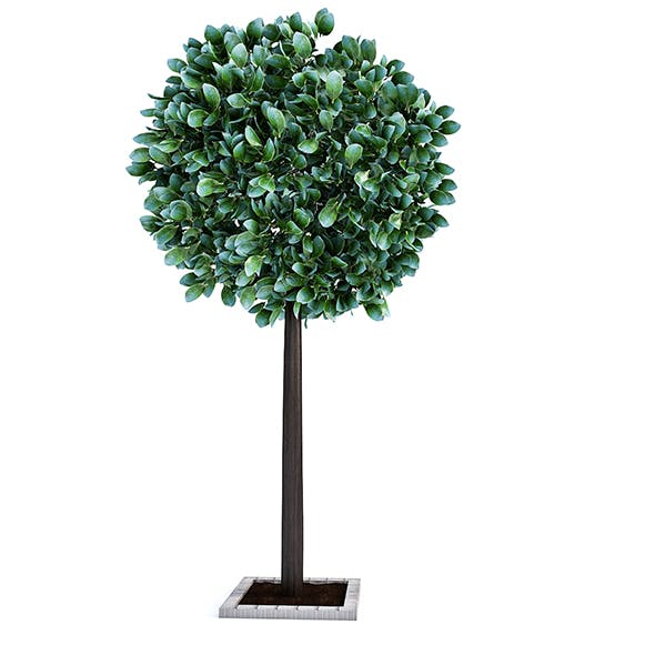 City Tree - 3DOcean Item for Sale