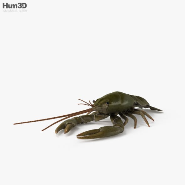 Crayfish HD - 3DOcean Item for Sale
