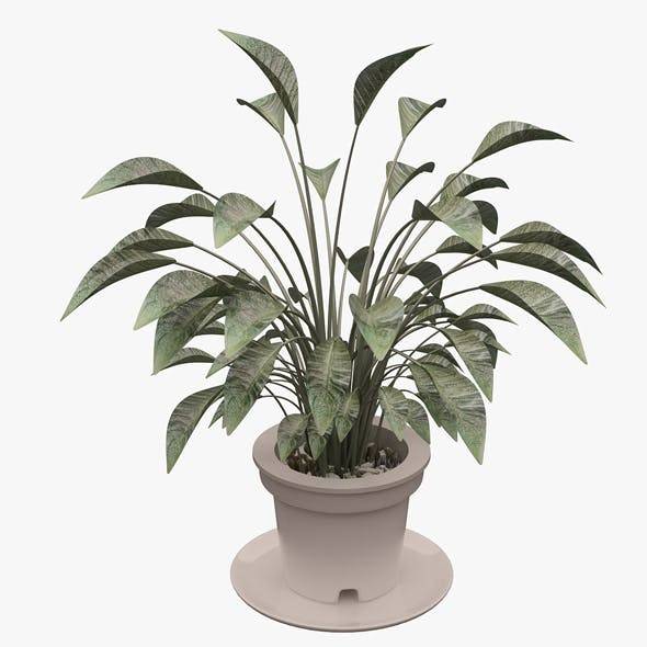Plant 01 - 3DOcean Item for Sale