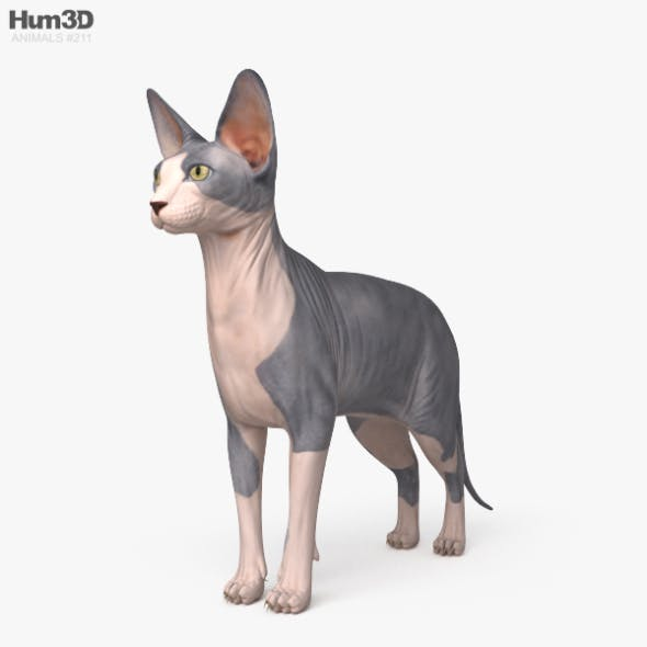 Sphynx Cat HD - 3DOcean Item for Sale