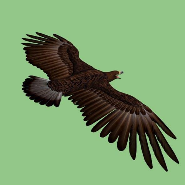 Golden Eagle - 3DOcean Item for Sale