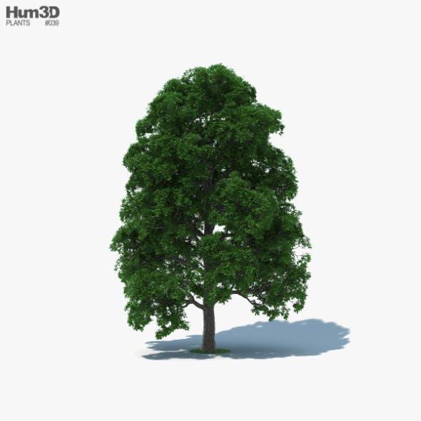 White Oak Tree - 3DOcean Item for Sale