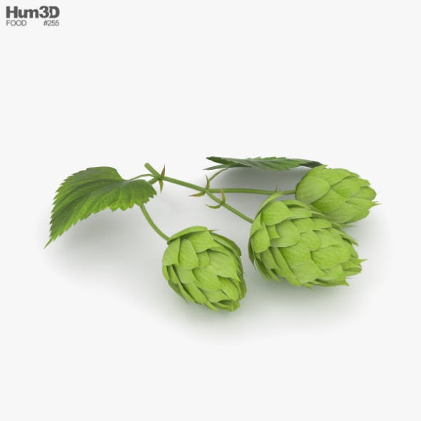 Hops - 3DOcean Item for Sale