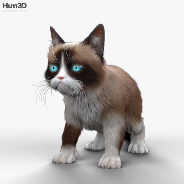 Grumpy Cat HD - 3DOcean Item for Sale