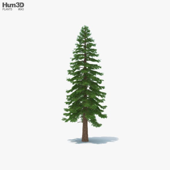Redwood Tree - 3DOcean Item for Sale