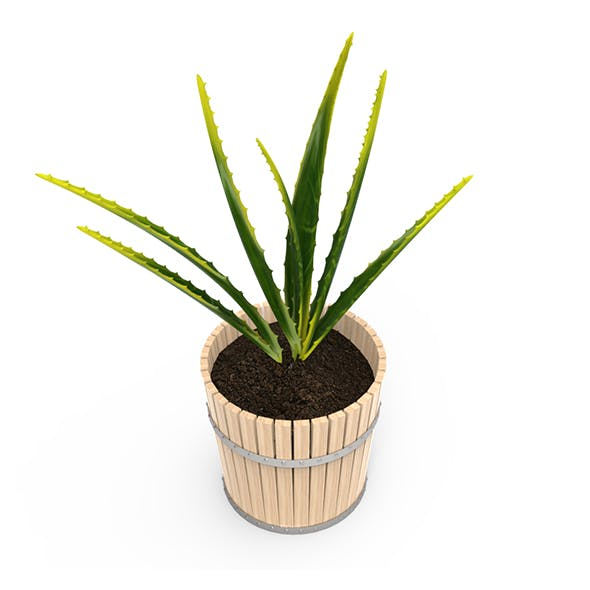 Houseplants - 3DOcean Item for Sale