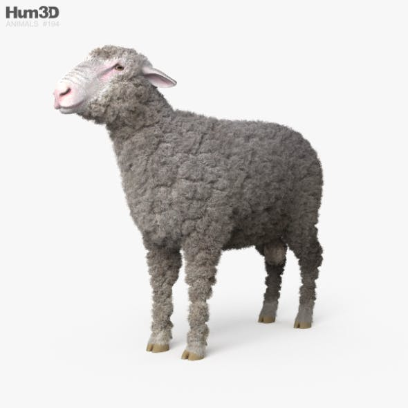 Sheep HD - 3DOcean Item for Sale