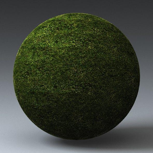 Grass Landscape Shader_021 - 3DOcean Item for Sale