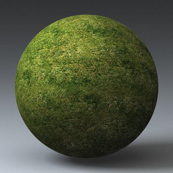 Grass Landscape Shader_049 - 3DOcean Item for Sale