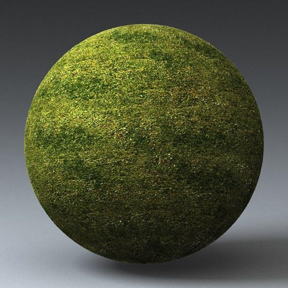 Grass Landscape Shader_050 - 3DOcean Item for Sale
