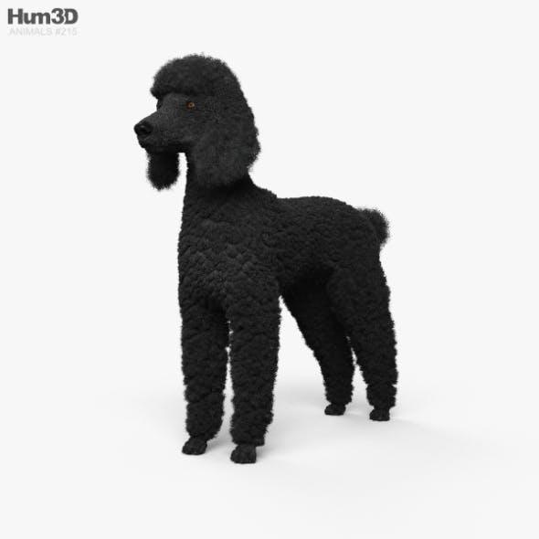 Poodle HD - 3DOcean Item for Sale