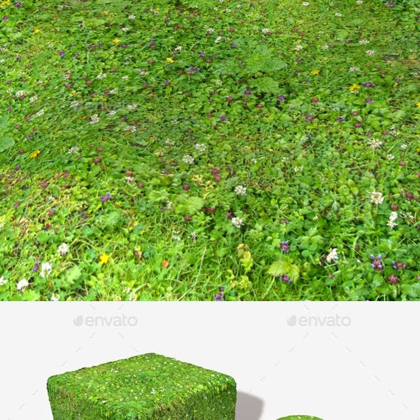 Meadow Flowers Seamless Texture