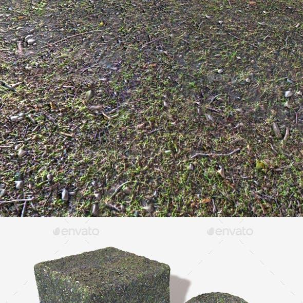 Wet forest Ground Seamless Texture