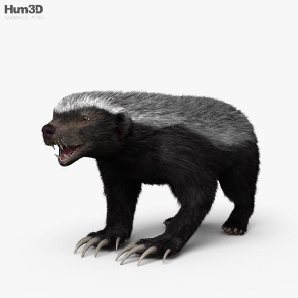 Honey Badger HD - 3DOcean Item for Sale