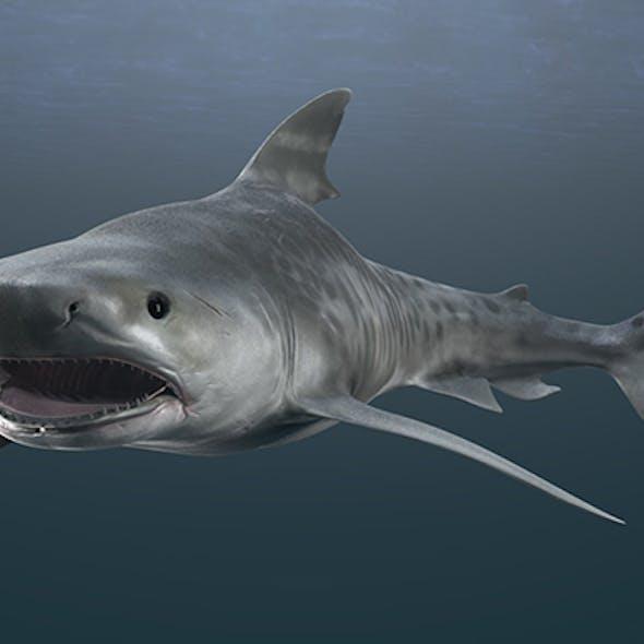Tiger Shark Rigged