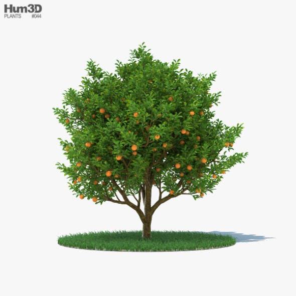 Orange Tree - 3DOcean Item for Sale