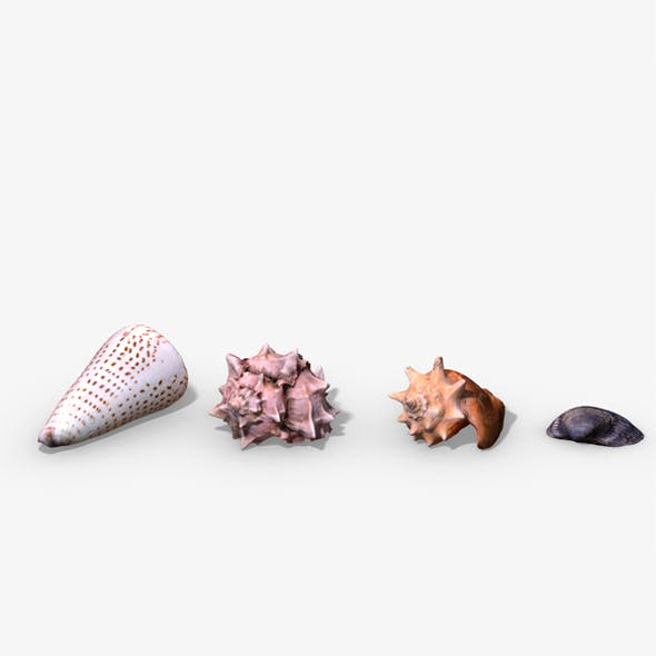 Photorealistic Seashells Collection - Scanned PBR
