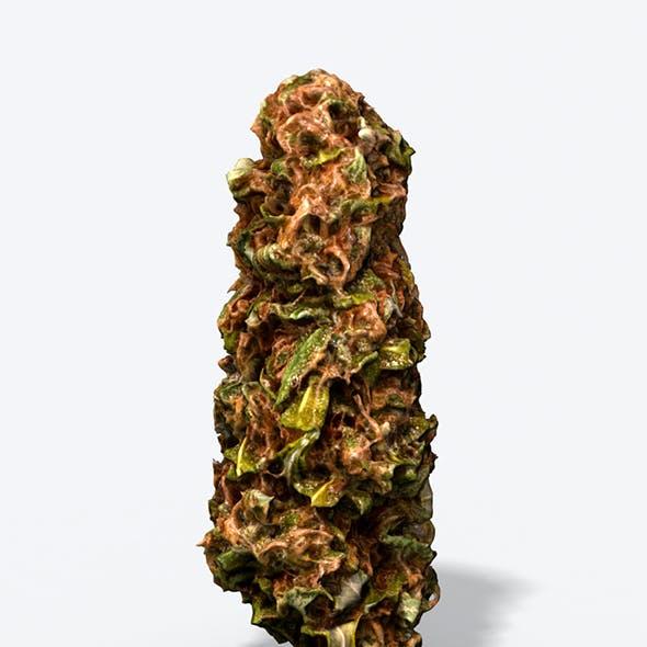 Marijuana Bud - Photoscanned PBR
