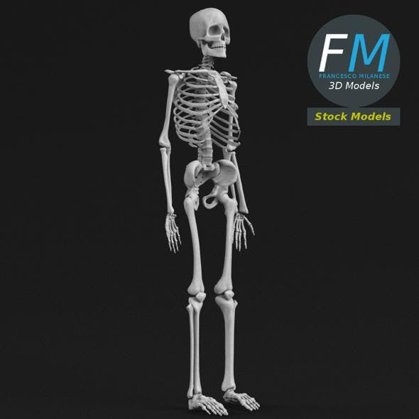 Anatomy - Complete human skeleton - 3DOcean Item for Sale
