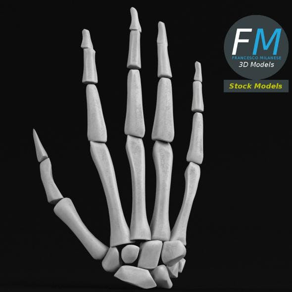 Anatomy - Human hand bones - 3DOcean Item for Sale