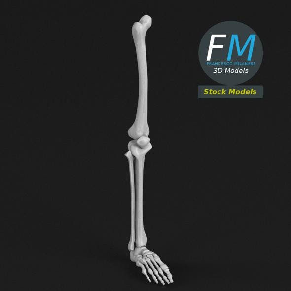 Anatomy - Leg and foot bones