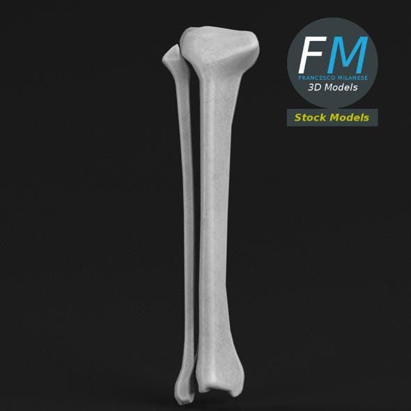 Anatomy - Tibia and Fibula - 3DOcean Item for Sale