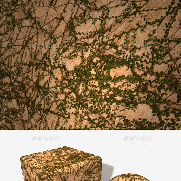 Vine Covered Wall Seamless Texture
