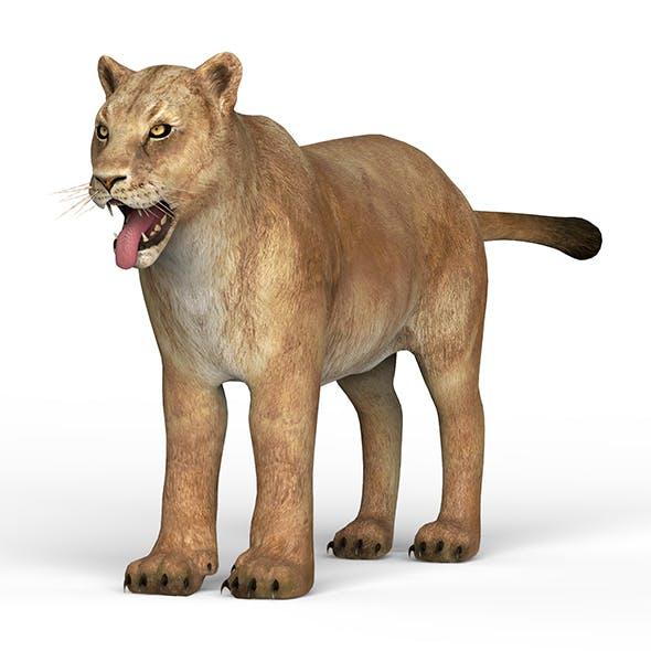 Lioness - 3DOcean Item for Sale