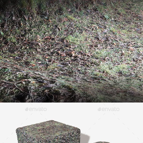 Frosted Woodland Ground Seamless Texture