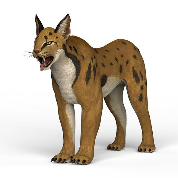 Game Ready Lynx