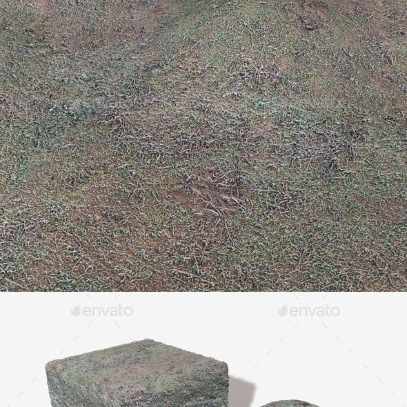 Frosted Grass Seamless Texture