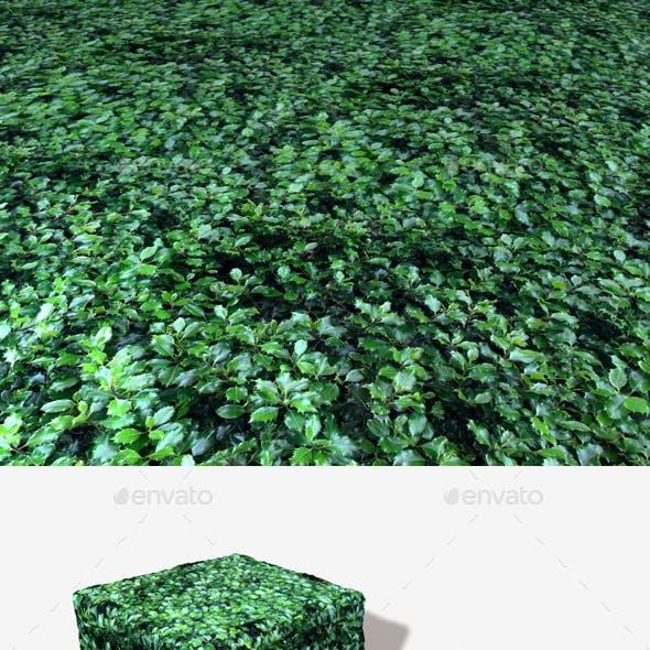 Ivy Seamless Texture
