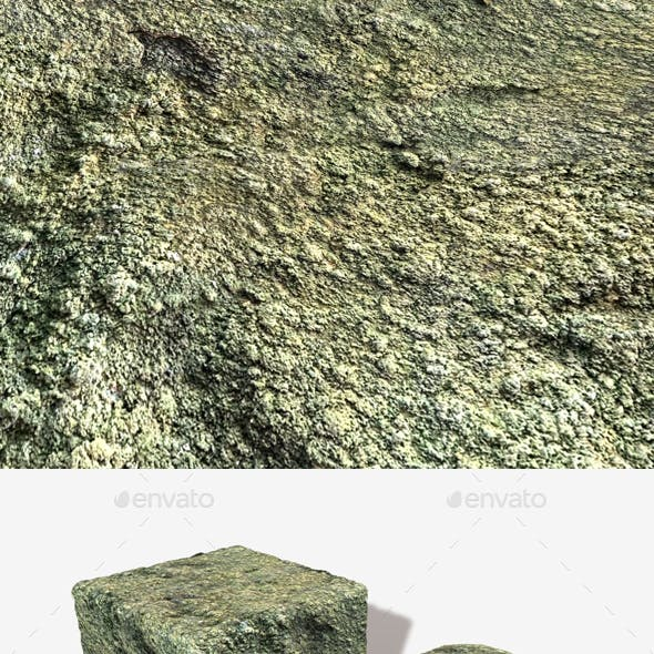 Mould and Moss Seamless Texture 2
