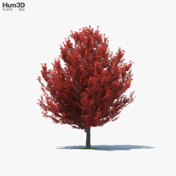 Red Maple - 3DOcean Item for Sale