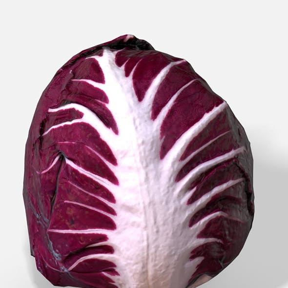Vegetable Red Chicory - Photoscanned PBR