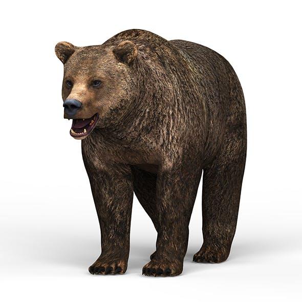 Wild Bear - 3DOcean Item for Sale
