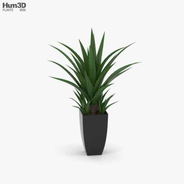 Agave In Decorative Pot
