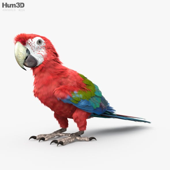Red-and-Green Macaw HD
