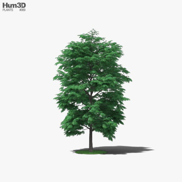 Pecan Tree - 3DOcean Item for Sale